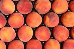 Pearson Farm Peaches