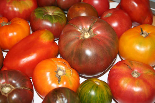 Sunshine Farms joins us with tomatoes, brussel sprouts, sweet potatoes, and more!